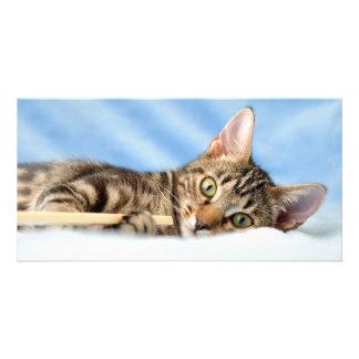 El jugar lindo del gatito tarjeta fotografica