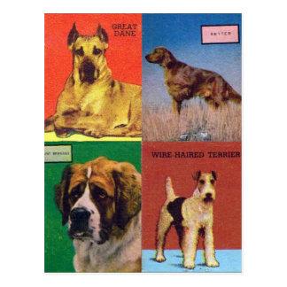 El kitsch retro del vintage hace juego las razas d tarjetas postales
