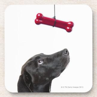 El laboratorio negro mezcló el perro con el hueso posavasos