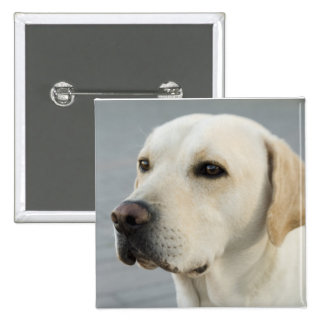 El Labrador de oro Pin Cuadrado