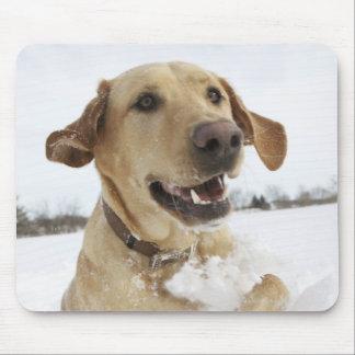 El labrador retriever que salta a través de nieve  alfombrilla de raton