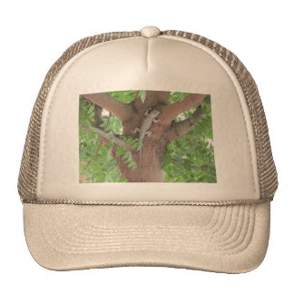 El lagarto espinoso de Clark en un árbol Gorros