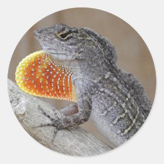 El lagarto muestra apagado etiquetas redondas