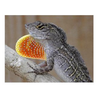 El lagarto muestra apagado postal