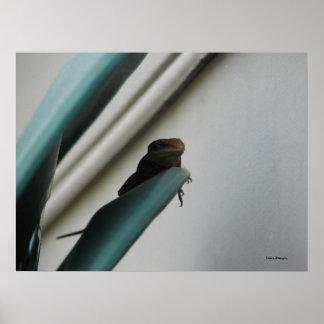 El lagarto se lame, los Danés-Diseños Impresiones
