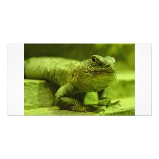 El lagarto verde tarjetas fotograficas