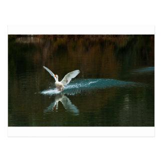 el lago del cisne postal