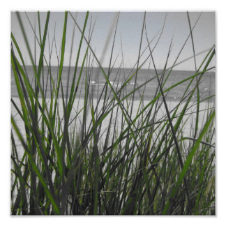 El lago Michigan detrás de la hierba Poster