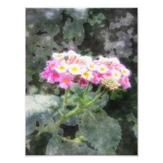 El Lantana florece la acuarela 2 Fotografías