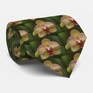 El lazo de los hombres de la elegancia de la corbatas
