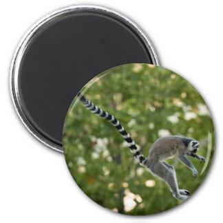 El Lemur salta el imán
