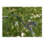 El Lemur salta la postal