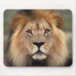 El león alfombrilla de raton