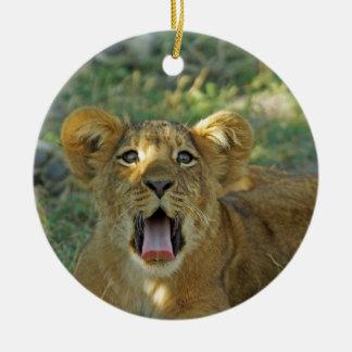 El león Cub bosteza Ornatos
