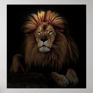 El león de oro posters