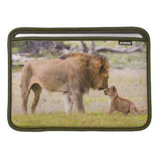 El león del macho alfa examina el cachorro fundas macbook air