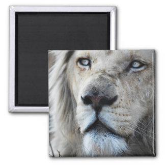 El león escucha mi latido del corazón imán cuadrado