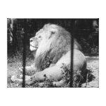 El león estiró la impresión de la lona impresión en lona