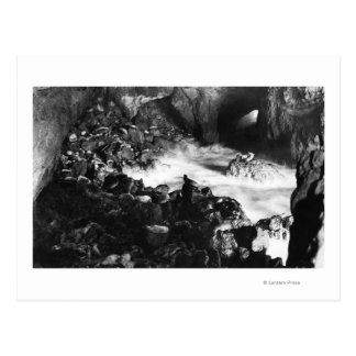 El león marino de la costa de Oregon excava la Postal