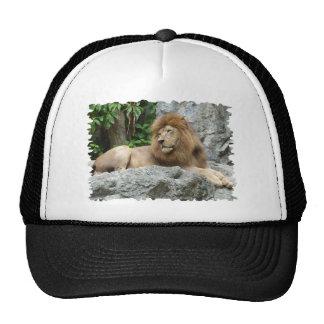 el león masculino marrón con la melena grande pone gorras de camionero