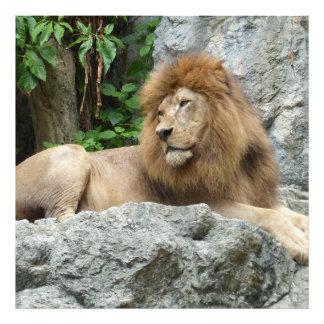 el león masculino marrón con la melena grande pone cojinete