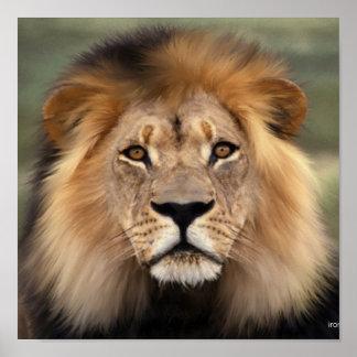 El león poster