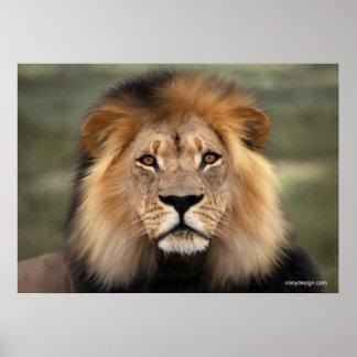 El león impresiones
