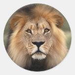 El león pegatinas redondas