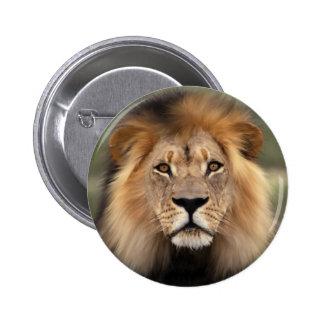 El león pin