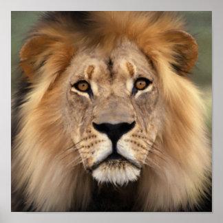 El león póster