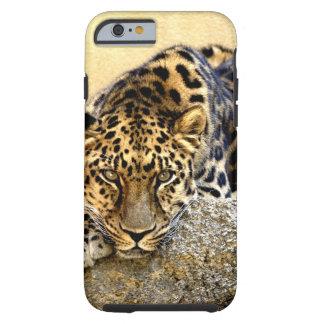 El leopardo de Amur Funda De iPhone 6 Tough