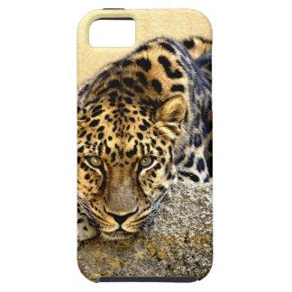 El leopardo de Amur iPhone 5 Carcasas