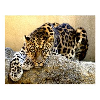 El leopardo de Amur Tarjeta Postal