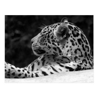 """El leopardo el despertar "" Postales"