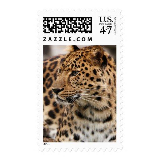 El leopardo estampillas