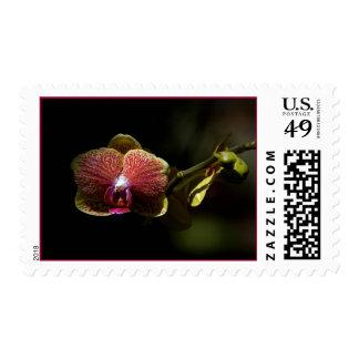 El leu cultiva un huerto orquídea franqueo