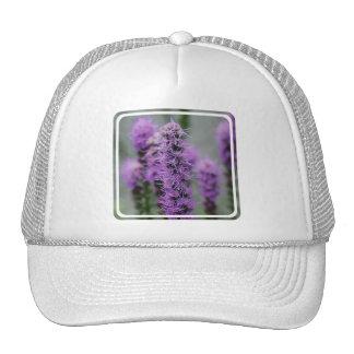 El Liatris púrpura florece el gorra de béisbol