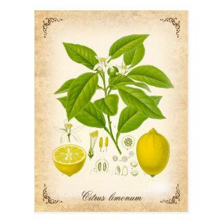 El limón - ejemplo del vintage postales