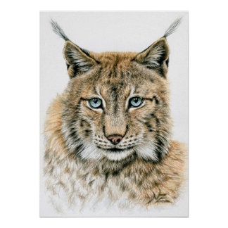 El lince - The Lynx Póster