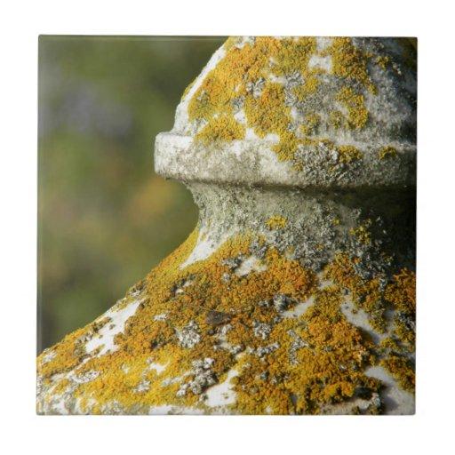 El liquen cubrió el obelisco del cementerio azulejos