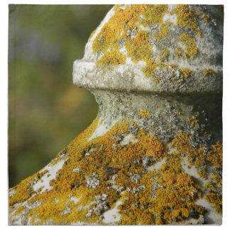 El liquen cubrió el obelisco del cementerio servilletas