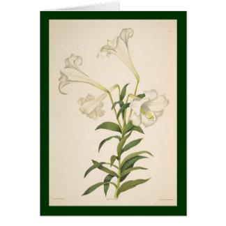 El lirio botánico del vintage florece la tarjeta
