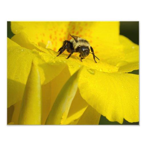 El lirio de Canna con manosea la abeja Arte Fotografico