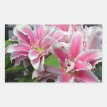 El lirio rosado del stargazer florece al pegatina