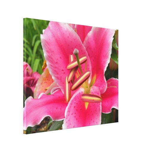 El lirio rosado envolvió la impresión de la lona impresión en lienzo estirada