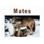 El lobo acopla la línea tarjetas postales