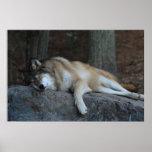 El lobo el dormir poster