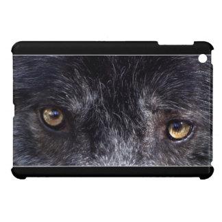 El lobo gris del macho alfa observa la foto de la