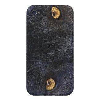 El lobo gris observa el caso fresco del iPhone iPhone 4 Fundas