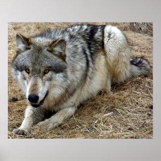 El lobo juguetón poster